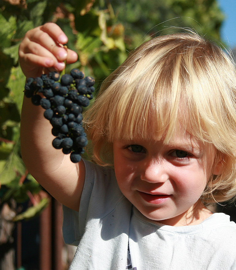 Child holding Figge grapes